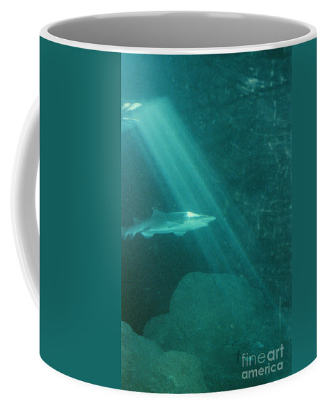Sharks Coffee Mug featuring the photograph Close Encounters by Jeffery L Bowers