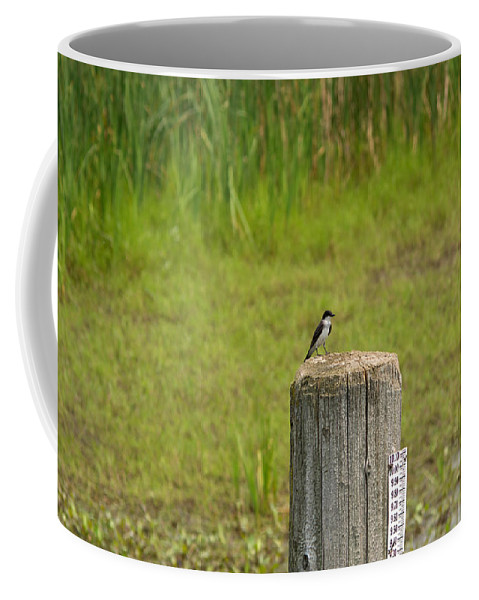 Tree Swallow Coffee Mug featuring the photograph Tree Swallow by Linda Kerkau