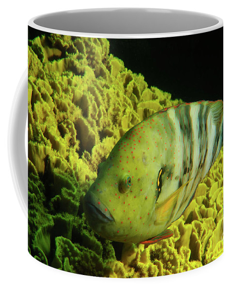 Underwater Coffee Mug featuring the photograph Underwater Photography by Hagai Nativ