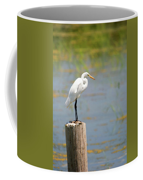 Great Egret Coffee Mug featuring the photograph Up Above by Linda Kerkau