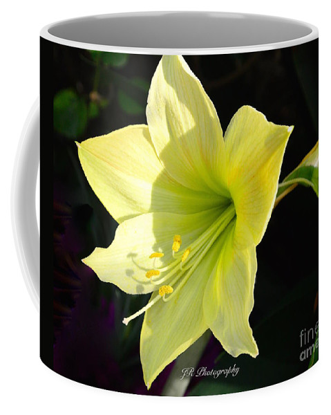 Welcome Spring Coffee Mug featuring the photograph Welcome Spring by Jeannie Rhode