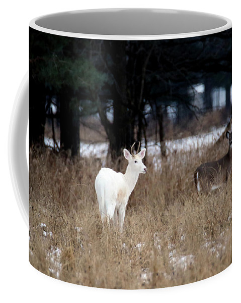 White Deer Coffee Mug featuring the photograph White Buck Brown Doe by Brook Burling