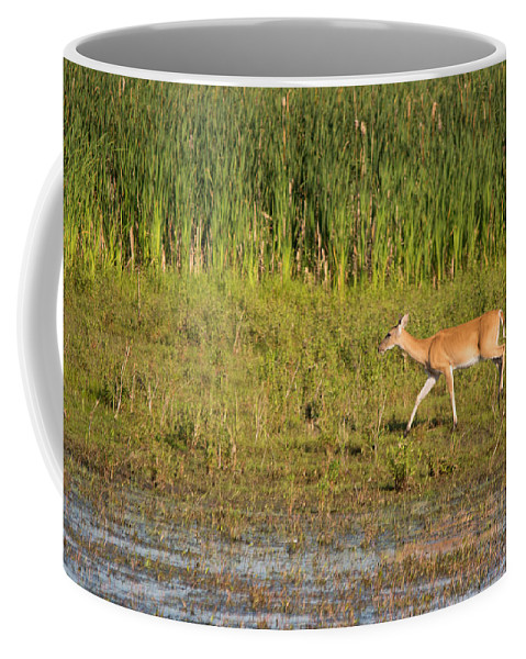 Whitetail Deer Coffee Mug featuring the photograph Whitetail by Linda Kerkau