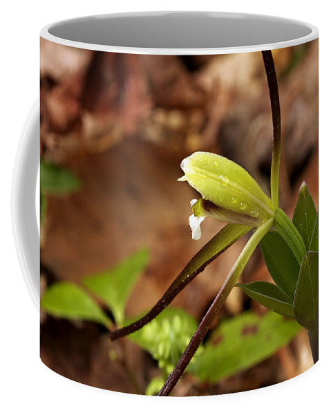 Flower Coffee Mug featuring the photograph Whorled Pogonia by Jack R Perry