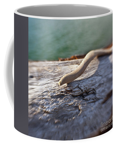 Reflection Coffee Mug featuring the photograph Wood by Avril Christophe