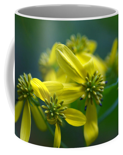 Background Coffee Mug featuring the photograph Yellow Wingstem by Jack R Perry