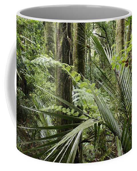 Rain Forest Coffee Mug featuring the photograph Jungle 99 by Les Cunliffe