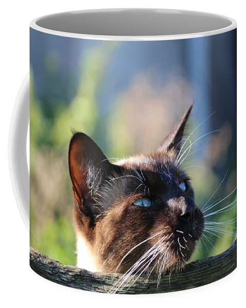 Cat Coffee Mug featuring the photograph Cat by FL collection