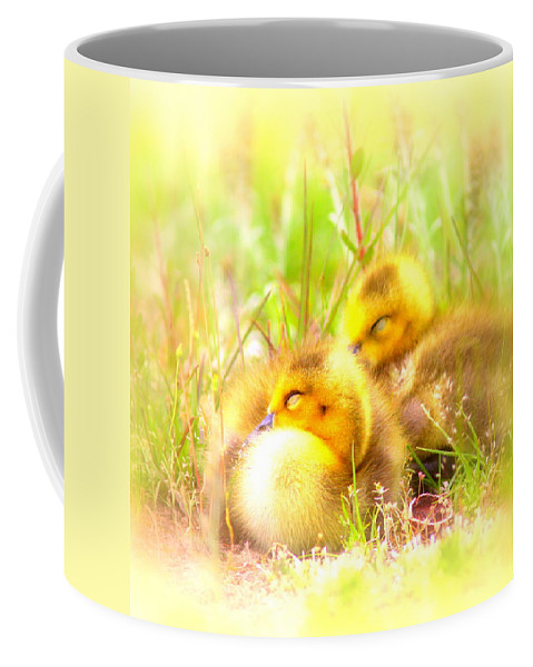 Canada Goose Coffee Mug featuring the photograph 2736 - Canada Goose by Travis Truelove