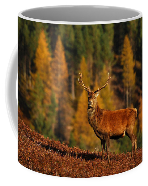 Stag Coffee Mug featuring the photograph Red Deer Stag by Gavin MacRae