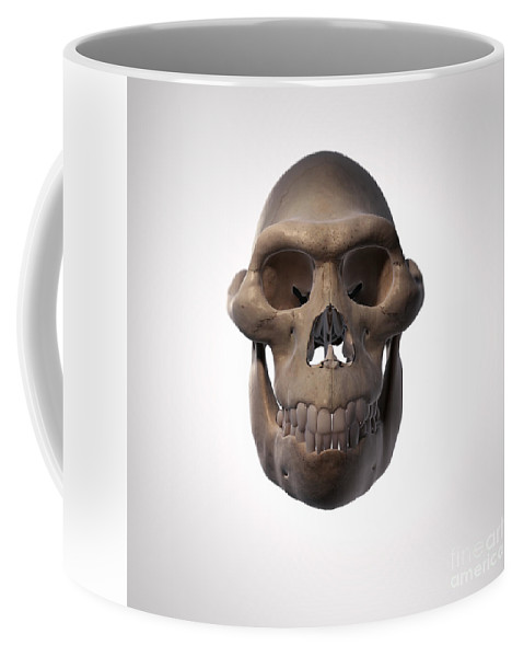 Digitally Generated Image Coffee Mug featuring the photograph Australopithecus Skull by Science Picture Co