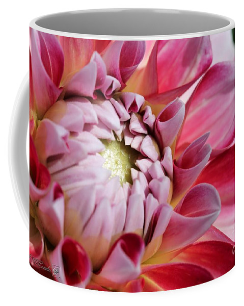 Mccombie Coffee Mug featuring the photograph Dahlia Named Hawaii by J McCombie