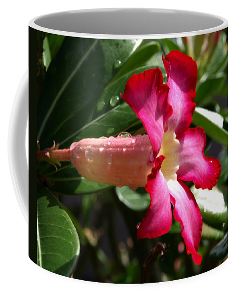 Desert Rose; Desert; Rose; Red; Pink; Flower; Bush; Garden; Florida; Plant; Adenium; Obesum; Africa; Coffee Mug featuring the photograph Desert Rose by Allan Hughes