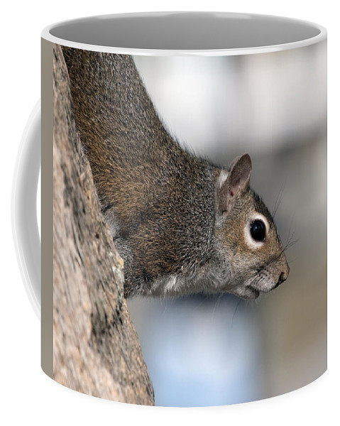Squirrel Coffee Mug featuring the photograph Eastern Gray Squirrel by Allan Hughes