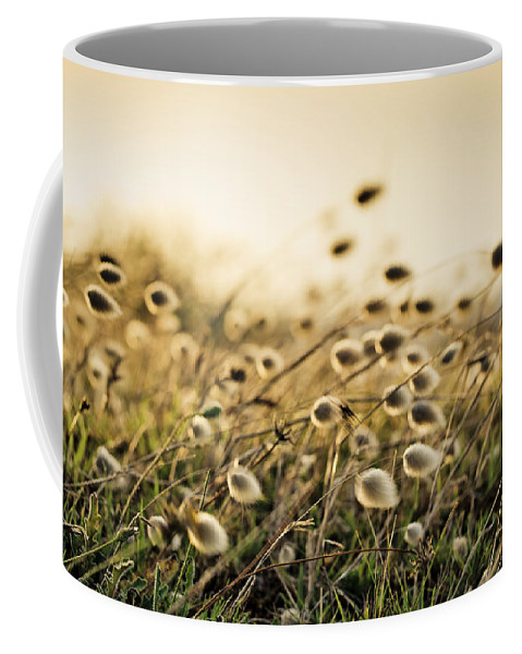 Reedgrass Coffee Mug featuring the photograph Evening by Nailia Schwarz