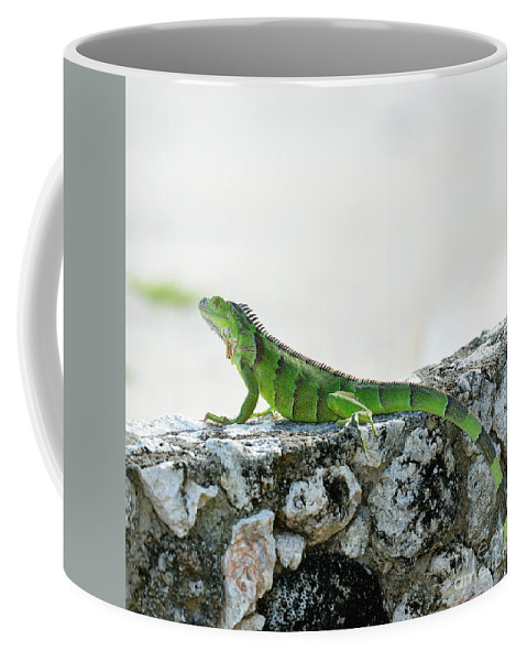 Iguana Coffee Mug featuring the photograph Green Iguana by Svetlana Foote