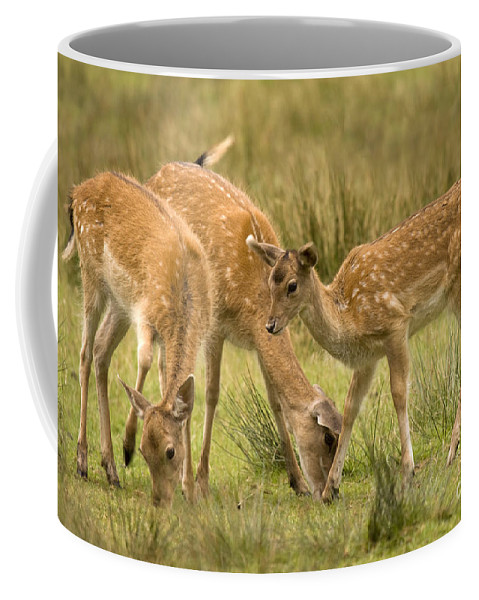Fallow Deer Coffee Mug featuring the photograph Lunch Time by Angel Tarantella