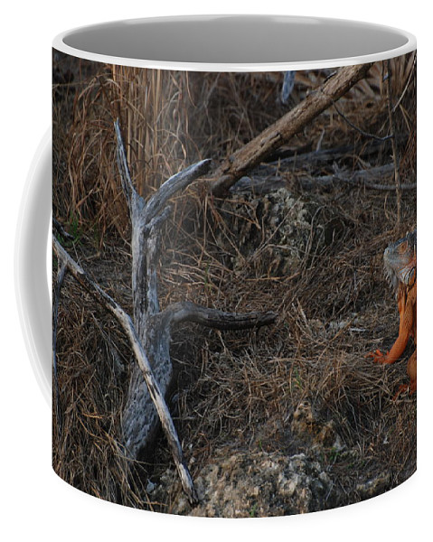Branches Coffee Mug featuring the photograph Orange Iguana by Rob Hans