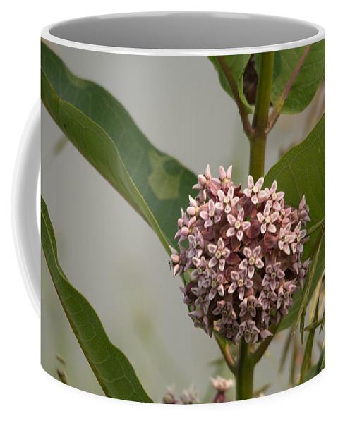 Swamp Milkweed Coffee Mug featuring the photograph Pink by Linda Kerkau