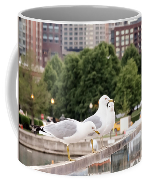 3 Seagulls In A Row Coffee Mug featuring the photograph 3 Seagulls In A Row by Cynthia Woods