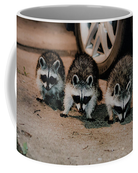 Coffee Mug featuring the photograph 3 Stooges by Racheal Huser