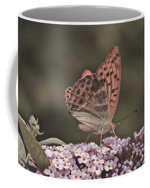 Butterfly Coffee Mug featuring the photograph Tramonti Butterfly by Photos By Zulma