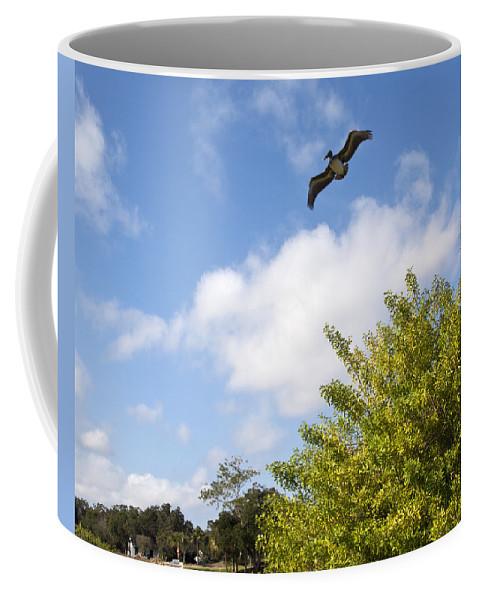 Turkey Coffee Mug featuring the photograph Turkey Creek In Palm Bay Florida by Allan Hughes