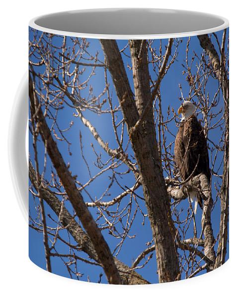 Bald Eagle Coffee Mug featuring the photograph Watchful by Linda Kerkau