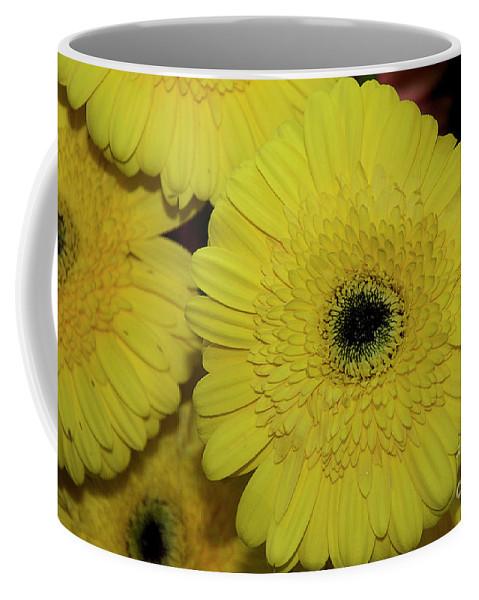 Flowers Coffee Mug featuring the photograph Yellow Gerbers by Elvira Ladocki