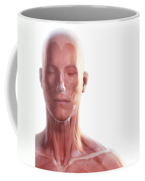 Digitally Generated Image Coffee Mug featuring the photograph Facial Muscles by Science Picture Co
