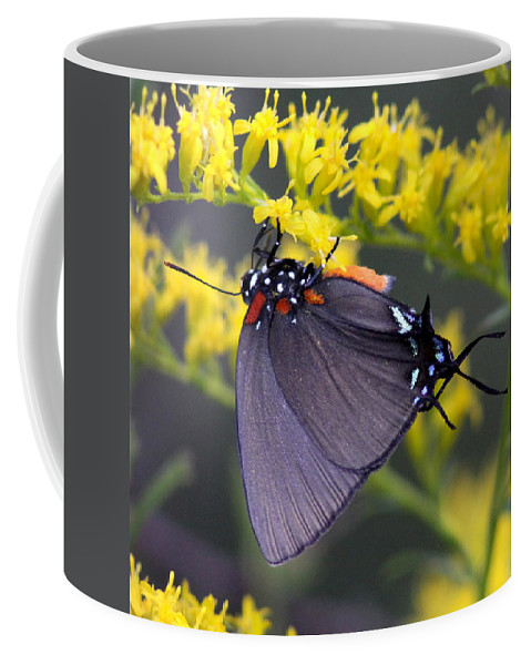 Butterfly Coffee Mug featuring the photograph 3398 - Butterfly by Travis Truelove