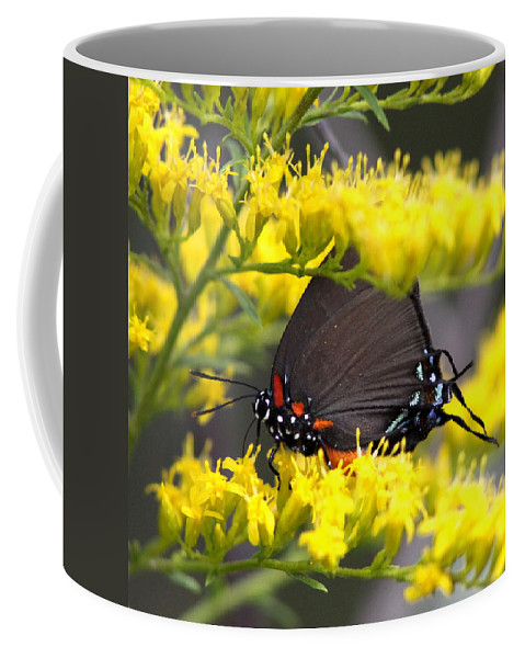 Butterfly Coffee Mug featuring the photograph 3454 - Butterfly by Travis Truelove