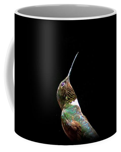 Ruby-throated Hummingbird Coffee Mug featuring the photograph 3990 - Ruby-throated Hummingbird by Travis Truelove