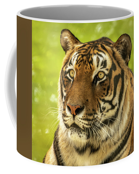 Bengaltiger Coffee Mug featuring the photograph Bengal Tiger by David Pine