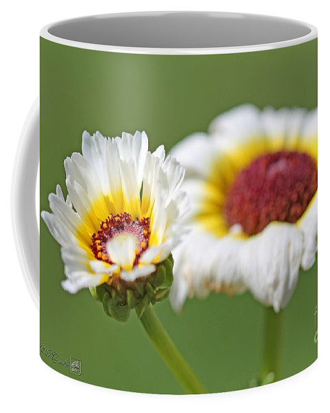 Mccombie Coffee Mug featuring the photograph Chrysanthemum Named Polar Star by J McCombie