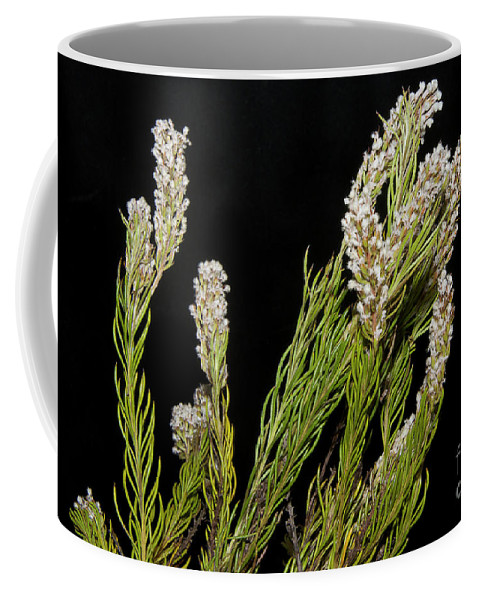 Flowers Coffee Mug featuring the photograph Exotic Flower by Elvira Ladocki