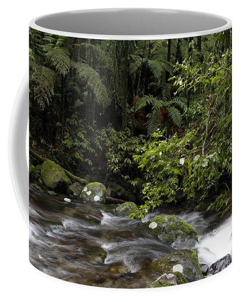 Creek Coffee Mug featuring the photograph Forest Stream by Les Cunliffe