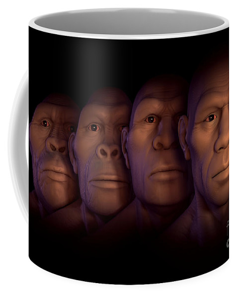 Digitally Generated Image Coffee Mug featuring the photograph Human Evolution by Science Picture Co