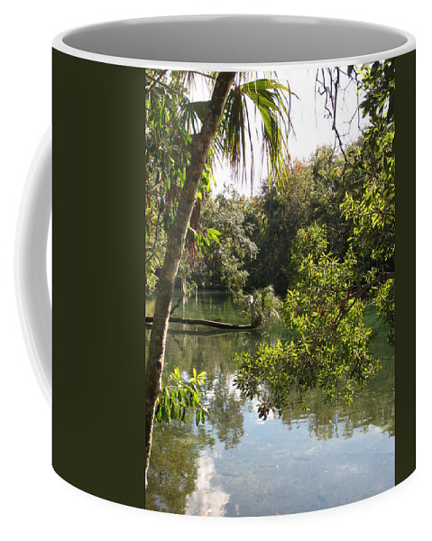 Swamp Coffee Mug featuring the photograph Swamp Reflection by Christiane Schulze Art And Photography