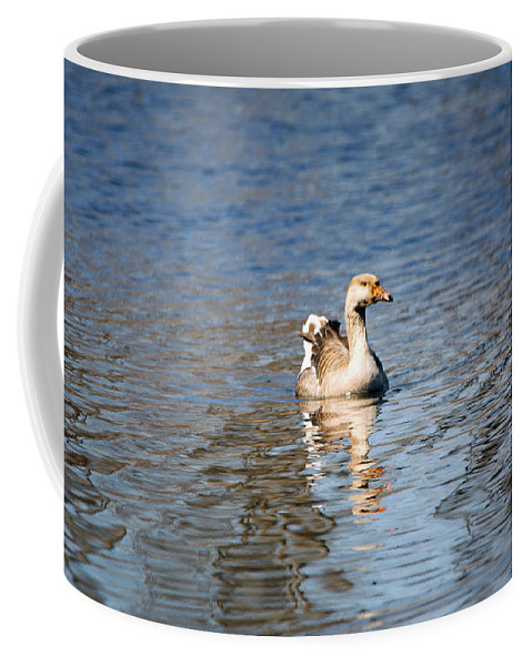 Swan Coffee Mug featuring the photograph Swan by Linda Kerkau