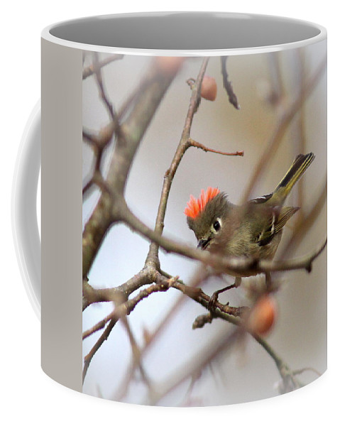 Ruby-crowned Kinglet Coffee Mug featuring the photograph 4369 - Ruby-crowned Kinglet by Travis Truelove