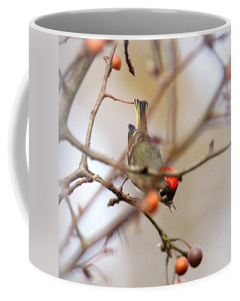 Ruby-crowned Kinglet Coffee Mug featuring the photograph 4370 - Ruby-crowned Kinglet by Travis Truelove