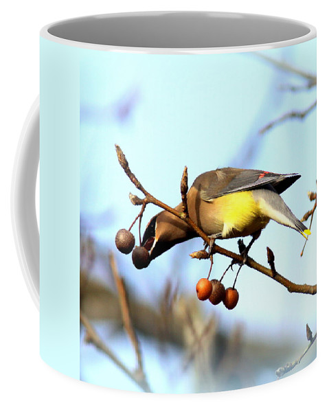Cedar Waxwing Coffee Mug featuring the photograph 4427 - Cedar Waxwing by Travis Truelove