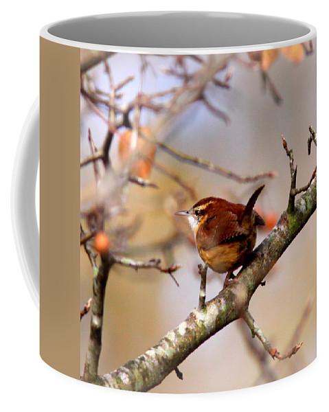 Carolina Wren Coffee Mug featuring the photograph 4446 - Carolina Wren by Travis Truelove