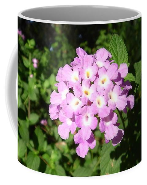 Australia Pink Flowers Coffee Mug featuring the photograph Australia - Pink Flowers by Jeffrey Shaw