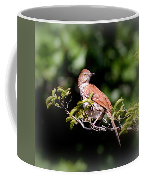 Brown Thrasher Coffee Mug featuring the photograph 4979 - Brown Thrasher by Travis Truelove