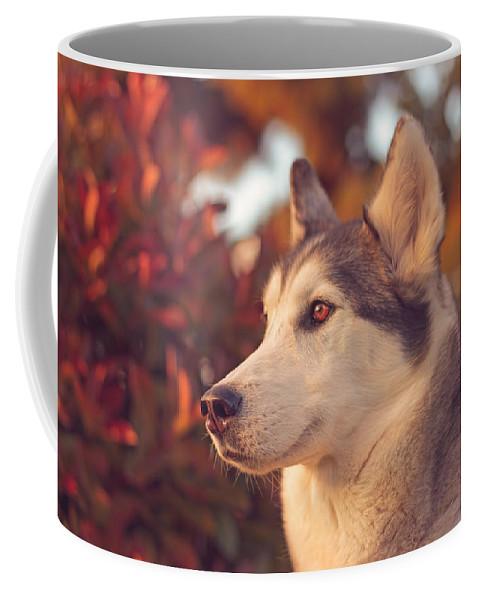 Animal Coffee Mug featuring the photograph Aurora by Brian Cross