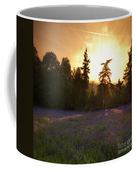 Bluebells Coffee Mug featuring the photograph Bluebells by Angel Ciesniarska