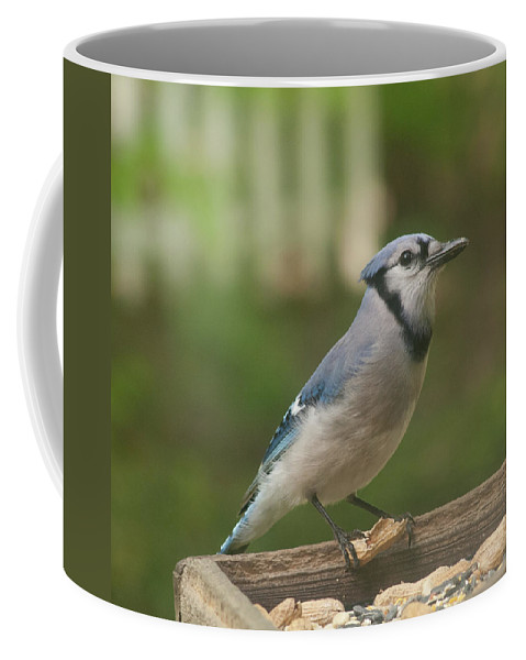 Bluejay Coffee Mug featuring the photograph Bluejay by Diane Schuler