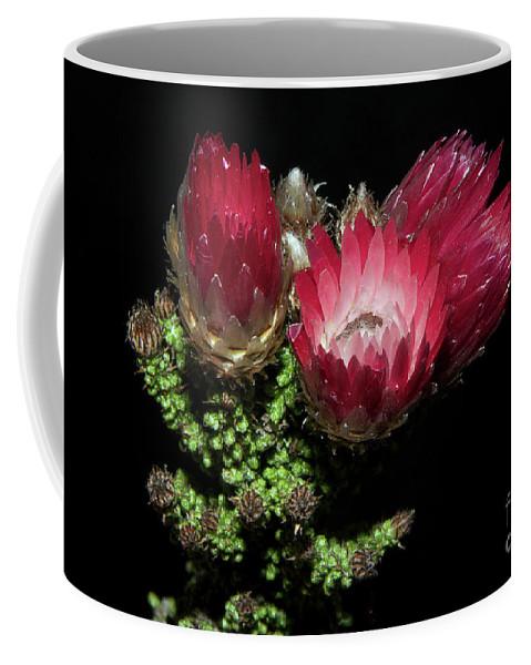 Flowers Coffee Mug featuring the photograph Exotic Flower by Elvira Ladocki